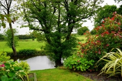bloom-blooming-country-countryside-145685-scaled